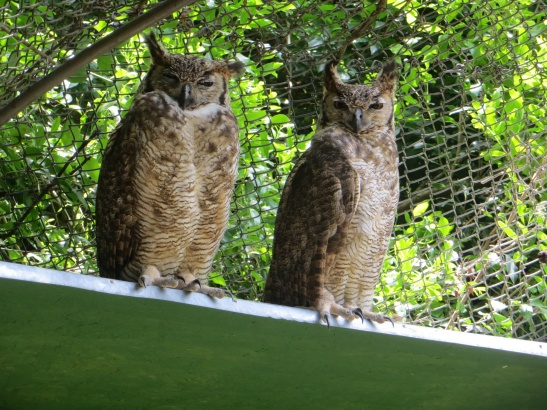 Cerro Pan de Azucar - Animal Reserve - Owls