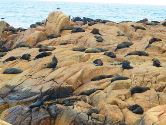 Cabo Polonio - Sea Lions in front of the lighthouse